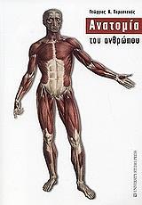 anatomia toy anthropoy photo