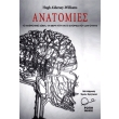 anatomies photo