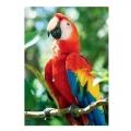 trefl puzzle 1000pz nature scarlet macaw extra photo 1